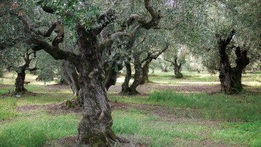 Learn how an Olive Oil Refinery works